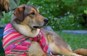 Reductress - Portable Prayer Dog