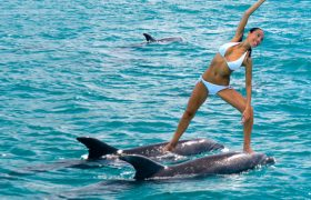 Photos of Truly Remarkable People Doing Yoga on Dolphins
