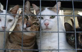 "Local Animal Shelters Overflowing with ""No-Talent"" Cats"