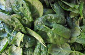 spinach salmonella