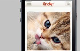 cat tinder