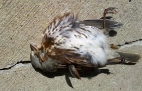 How to Repurpose a Dead Bird You Found