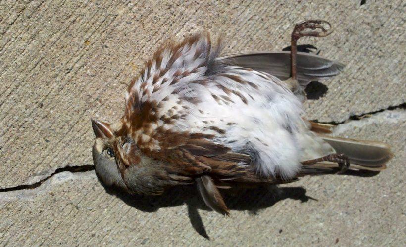 bird - reductress