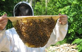 Maybe You Should Get into Beekeeping?