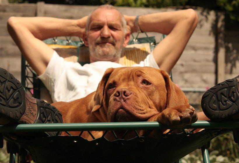 Dog - Reductress