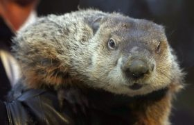 Punxsutawney Phil Sees Shadow, Predicts Six More Weeks of Jennifer's Relationship of Convenience
