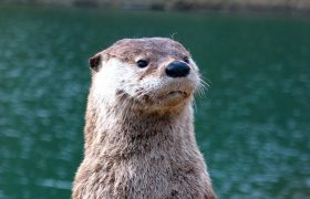 'There's No Need For Feminism Because Women Are Equal Now,' Says Jenna, the Ignorant Talking Otter