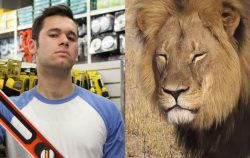 RACIST LION