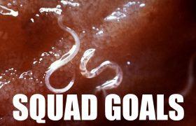 6 Parasites That Epitomize #SquadGoals