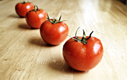 Healthy_Red_Tomatoes_are_Wet_and_Organic