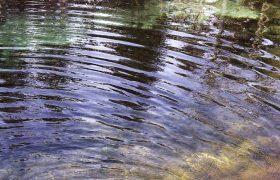 Trend Alert: Stagnant Pond Waves!