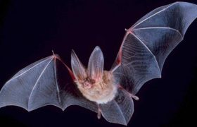 13 Not-Scary Bats [Sponsored by Bat Fancy]