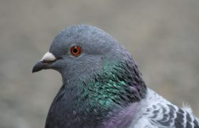 8 Pigeon Hacks That Will Change Your Life
