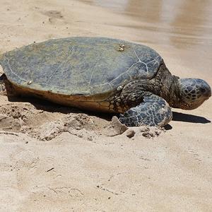 2. Sea Turtle
