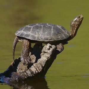 3. Adventurous yet Conflicted Turtle