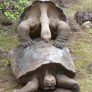 4. Fucking Turtles