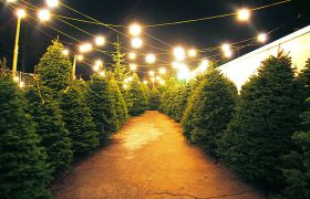 Parking Lot Magically Transforms into Christmas Tree Farm, Again!