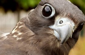 9 Falcon Pix to Send to Your Crush That GUARANTEE a Text Back