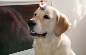 I'm Saving the Earth by Recycling My K-Cups to Make Dog Hats