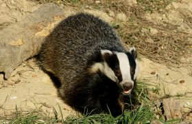 How to Talk to a Coworker When Her Perfume Attracts Badgers