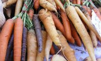 carrots root vegetables