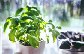 5 Easy-to-Grow Fresh Herbs to Let Rot on Your Windowsill All Summer