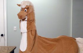 I Support All Women, Especially The One In This Horse Costume With Me