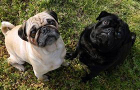 4 Sex Positions That Won't Disturb Derek's Rescue Pugs