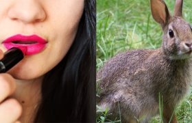 Cruelty-free Beauty Products That Would Still Look Better on an Animal Than on You