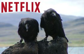 5 Ominous Crows Who Signal Everything That's Coming To Netflix This Fall