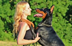 Woman Who 'Loves Dogs' Doesn't Even Know How To Ride One