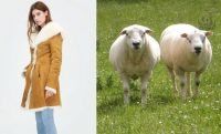How to fuck a sheep galleries 54