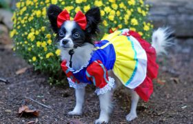Slutty Halloween Costume Ideas for Your Dog