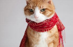 How To Look As Chic As These Cats Wearing Scarves