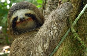 What If It Was Your Sister Or Your Mother? And By 'It' I Mean This Three-Toed Sloth