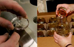 You've Heard of Freezing Your Eggs—But Have You Tried Canning Your Pubes?