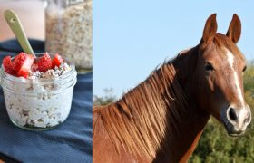 Morning Oats Toppings That Say, 'Neigh! I Am A Beautiful, Healthy Horse'