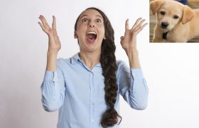 Study Finds 100% of Pet Owners Love It When I Squeal 'HI BABY!' at Their Dog