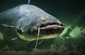 Wow! There Really ARE Plenty of Fish! Here Are 7 Sexy Single Fish