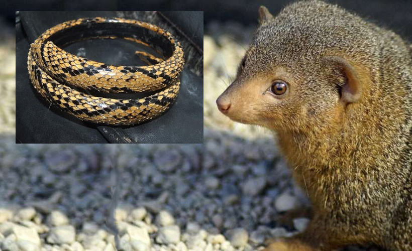Snakeskin Accessories That Will Attract Mongeese