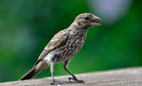 bird squawking