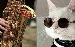 saxophone side by side cat wearing sunglasses