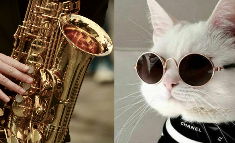 saxophone side by side cat wearing sunglasses